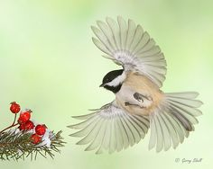 Cappy and the Rose Hips by Gerry Sibell, via 500px