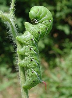 The top 5 garden insects and how to control them.