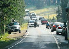 Yellowstone Traffic Jam. It wouldn't be Yellowstone without a Buffalo jam!