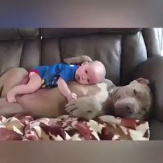 watch more videos – christa abele - Baby Animals Super Cute Animals, Cute Funny Animals, Cute Baby Animals, Funny Dogs, Animals And Pets, Cute Baby Videos, Cute Animal Videos, Cute Puppies, Cute Dogs