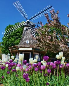 windmill in Pella Iowa photo from Heidi Lourens from HMH designs.I want to go see this place one day. Please check out my website Thanks.  www.photopix.co.nz