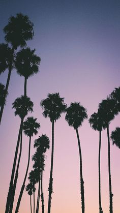 'Purple Sunset Palm Trees' Canvas Print by newburyboutique Iphone Wallpaper Tropical, Tree Wallpaper Iphone, Palm Wallpaper, Screen Wallpaper, Wallpaper Backgrounds, Iphone Wallpapers, Iphone Wallpaper Landscape, Nature Wallpaper, Aesthetic Backgrounds