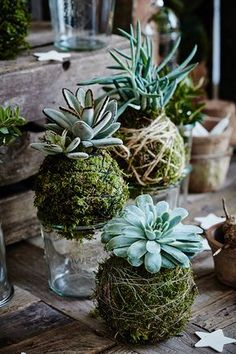 Lav skønne mosbolde - vi guider dig trin for trin Moss Garden, Garden Art, Flower Decorations, Christmas Decorations, Nature Decor, Plant Care, Trees To Plant, Flower Pots, Planting Flowers