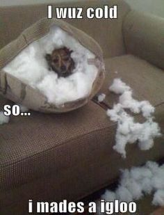 100 Animal Memes That Will Make Your Day 12 Times Pets Tried To Unlock Their Owners Phone And Failed Miserably 20 Best Funny Animal Photos for Wednesday Night Funny Animal Pictures Of The Day - 21 Pics Funny Animal Memes For You To Laugh Loud Pi. Funny Animal Memes, Animal Quotes, Cute Funny Animals, Funny Cute, Super Funny, Animal Captions, Animal Humor, Clean Animal Memes, Dog Memes Clean