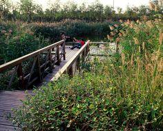 14-turenscape-landscape-architecture-31 « Landscape Architecture Works   Landezine
