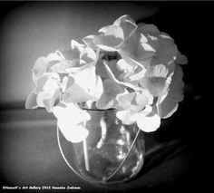 Hydrangea/Hortensia on empty glass vase