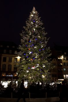 The Christmas tree in the centre of Strasbourg, France