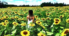 You Must Visit This Massive Sunflower Field In Ontario This Summer featured image Ontario Travel, Toronto Travel, Best Places To Travel, Places To Go, Sunflower Feild, Ontario Attractions, Discover Canada, Canada Travel, Summer Flowers