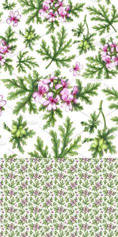 Pencil Design, Geraniums, Pencil Drawings, Rose, Flowers, Plants, Pink, Florals, Roses