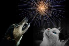 ***¿Cómo evitar accidentes con tu mascota en las fiestas?*** La mayoría de nosotros la pasamos de maravillas en las fiestas de Fin de Año y Navidad, pero nuestro compañero animal no. Aprende algunos métodos para cuidar a las mascotas durante los festejos......SIGUE LEYENDO EN...... http://comohacerpara.com/evitar-accidentes-con-tu-mascota-en-las-fiestas_9585h.html