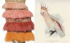 Birds give flight to our imaginations, via Li Edelkoort @ TrendTablet autumn/winter Home Decor Colors, Colorful Decor, Bird Skull, Cockatoo, Color Inspiration, Inspiration Boards, Bird Feathers, Girly Things, Orange Color