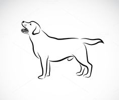 Vector image of an dog labrador by yod67 on @creativemarket