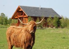 is located in the area, within the county of offering quality holiday lodges and log cabins. Scottish Highland Cow, Highland Cattle, Scottish Highlands, Big Sky Lodge, Open Field, Ten Minutes, Luxury Holidays, Inverness, Log Cabins
