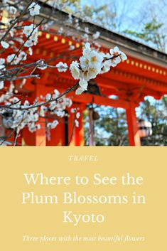 A quick guide to off-the-beaten-path locations to get a glimpse at Japan's plus blossoms if you're in the Kyoto/Nara region. Visit Japan, Most Beautiful Flowers, Nara, Weekender, Japan Travel, Kyoto, Blossoms, Plum, Things To Do