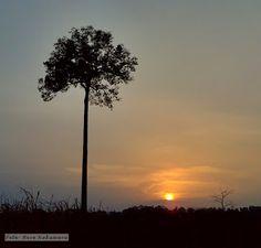Meu espelho que o diga: O sol e a castanheira - Belém do Pará