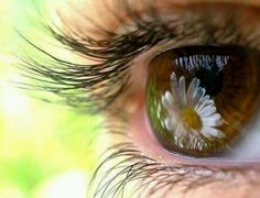 Daisy reflected in eye