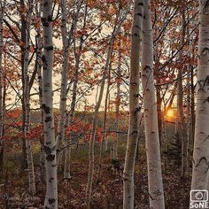 Maine Pic of the day 10.02.15 Photographer @susangarver Congratulations! #scenesofME