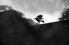 Magpie Magpie, Bald Eagle, Celestial, Bird, Photography, Outdoor, Animals, Outdoors, Photograph
