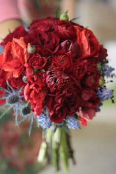Red cabbage roses, red and burg carnations, red fringe tulips, red double tulips, red anemone, red spray roses, and red ranunculus with blue thistle and blue muscari.