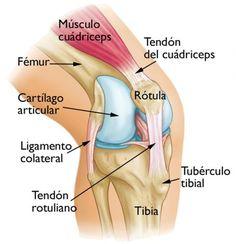 Condromalacia rotuliana. Qué es y cuales son las causas, síntomas y tratamiento