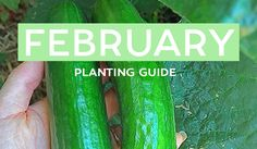 Your February Edible Planting Guide - Australia Wide! Broc, Cukes, Warrigal Greens + a HEAP more! Remember to save this list as an image to your phone so you don't forget what to plant!