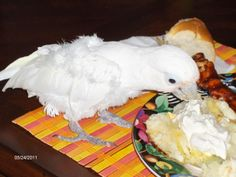 I share dinner with Mommy and I hog all the sour cream! I'm such a little Piggy! 2010  Oski