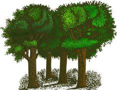 Des Forêts, Arbres, Plantes