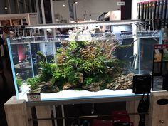 Home Aquarium, Aquarium Design, Aquarium Ideas, Aquarium Backgrounds, Water Tank, Ikebana, Flora, Aquascaping, Tanks