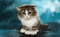 Scarica sfondi gatto, gattino, pioggia, solo cat, simpatici animali
