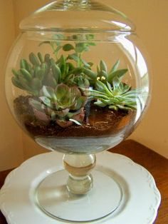 I was really enticed taking into consideration I maxim a succulent terrarium at one of my friends flourishing room, and soon realized that it is an awesome stuff for decorating home. Succulents In Containers, Cacti And Succulents, Planting Succulents, Planting Flowers, Growing Succulents, Terrariums, Succulent Terrarium, Terrarium Scene, Mini Terrarium