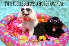 EVERY POODLE DESERVES A SPOT OF SUNSHINE!!!