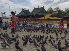 Gandan Monastery is famous for its pigeons! Why not come and feed them? http://mongoliansecrethistory.mn/let-us-show-you-our-secrets/