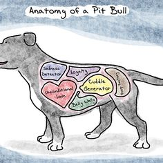Anatomy of a Pit Bull available in tees, hoodies, prints, stickers, ect!