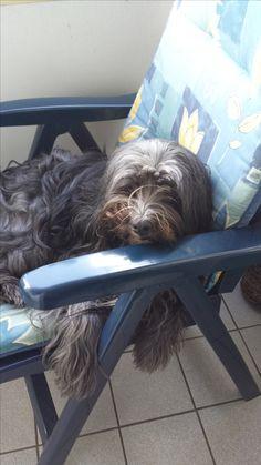 Hunde Foto: Sonja und Rambo - chillen auf dem Balkon Hier Dein Bild hochladen: http://ichliebehunde.com/hund-des-tages  #hund #hunde #hundebild #hundebilder #dog #dogs #dogfun  #dogpic #dogpictures