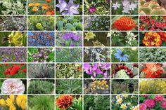 Molte piante hanno un fabbisogno idrico limitato: facciamo insieme un viaggio tra fiori, bulbose e arbusti... che riescono a tollerare la siccità.