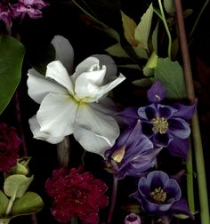 Bloom Day Scans by Craig Cramer