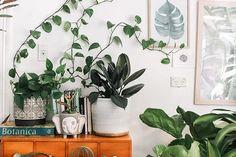 Como montar uma decoração aconchegante e afetiva gastando pouco - Follow the Colours Indoor Plants Clean Air, Air Cleaning Plants, Best Indoor Plants, Feng Shui, Perfect Plants, Cool Plants, Faux Plants, Potted Plants, Cactus Plants