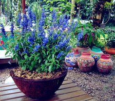 flores-para-jardins