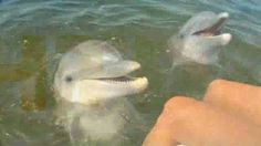 On My Bucket List to Swim with a Florida superstar, the bottlenose dolphin, at Marineland near St. Augustine.