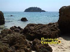 Playa Arrabida. Portugal. Floristería Correflor. 91 695 62 71