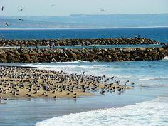 Costa da Caparica - Setúbal - Portugal