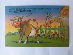 Vintage bagpipe comic cow so funny Scotch Scottish funny postcard Funny Postcards, Scotch, Make Me Smile, Funny Cows, Moose Art, Horses, Comics, Work Hard, Laughing