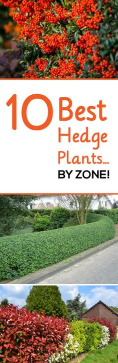 Grow a natural fence line with these beautiful hedge plants.