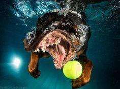 underwater-puppies-006