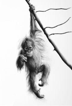 Orangatang Animal Drawings, Pencil Drawings, Art Drawings, Monkey Pictures, Art Pictures, Amazing Drawings, Amazing Art, Tatoo, Pencil Painting
