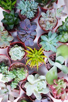 How to make a Succulent Garden DIY - QuinnCooperStyle.com