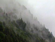 Mountian Mist