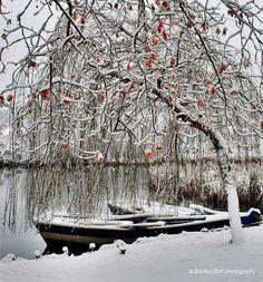 Pogradec city - Albania - December 2016