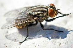 15 rimedi naturali per allontanare le mosche Cleaning Hacks, Garden, Estate, Dom, Barbecue, Egypt, Therapy, Bible, Portrait