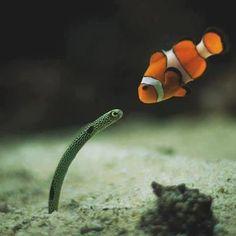 Marine Life Encounter